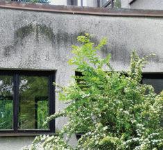 Plísně na fasádách domů, proč vznikají, co mohou způsobit a jak jim předcházet